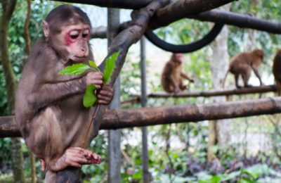 Phong Nha Jungle Trek & Wildlife 1d