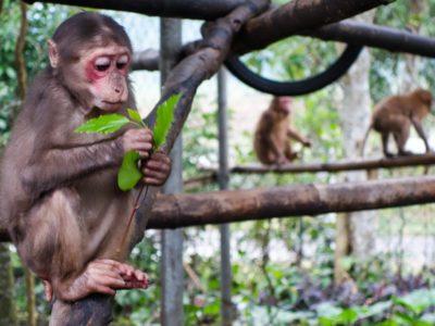Phong Nha Jungle Trek & Wildlife 1d